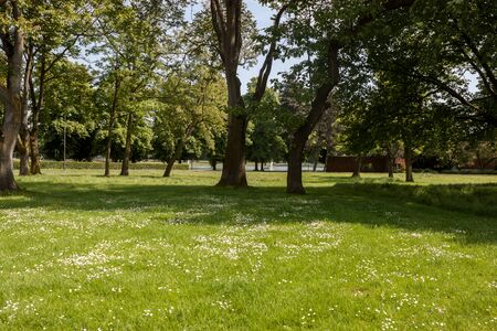 Beautiful park scene in public park with green grass field and green tree plant Stock Photo