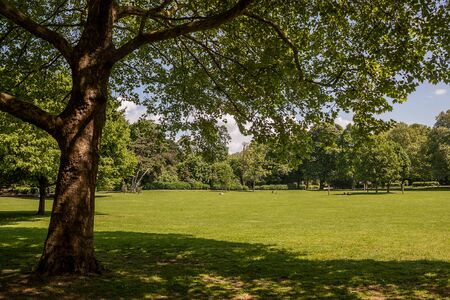 Beautiful park scene in public park with green grass field, green tree plant