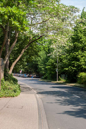 A street with green trees covered with the sun