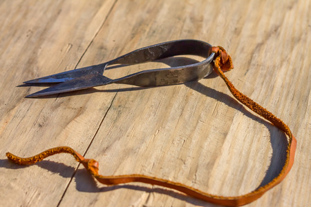 flay: Antique sheep wool shears scissors with the rope on a wooden backround. Stock Photo