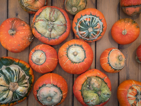 shinning: Assorted pumpkins on wooden boards with an shinning backdrop