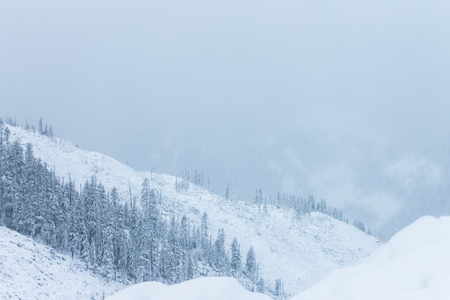 the taiga: Beautiful taiga hills on Far East of Russia in early october. Taiga in winter. Beautiful nature. Snowy weather.