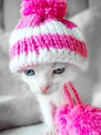A cute little kitten in a pink knitted hat with pompoms looks on something frown. Cute little kitty in hat on a white carpet.