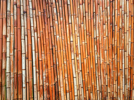 Bamboo fence background. Bamboo stalks lined up in a row.