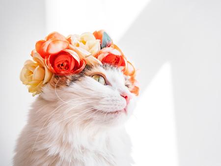 Piękny kot Calico z wieńcem na głowie. Urocza kotka w kwiatowym diademie na głowie siedzi w słońcu i odwraca wzrok.