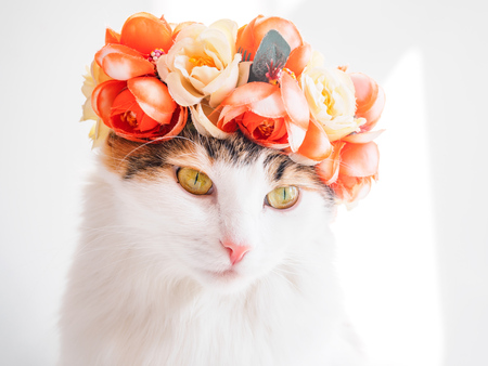 Beautiful Calico Cat with a wreath on his head. Cute kitty in a flowers diadem on her head sits in the sun and looks away. Stockfoto