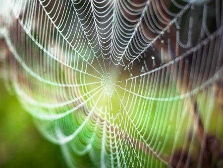 Schönes Spinnennetz, dekoriert mit Tautropfen, die sich am frühen Morgen im Wind wiegen. Natürlicher Hintergrund