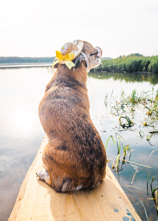 Chihuahua wearing sunglasses and straw hat sits on a bench by the river enjoying the sun. Fashionable dog in a hat and glasses resting on the beach Stock Photo