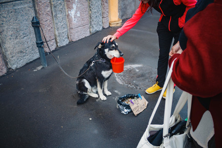 The tied dog asks for alms in the street. Passers stroking the dog. The owner uses the animal to make money on the streets. Animals making money for people Stock Photo