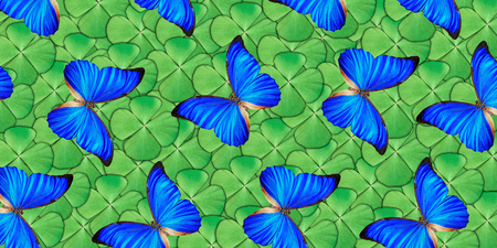 Beautiful natural background with a lot of vibrant blue butterflys flying over four leaf clover. Photo collage art work A high resolution Stock Photo