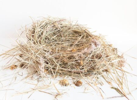 Dry hay isolated. A pile of straw on a white background. The dry grass is folded in the shape of a nest