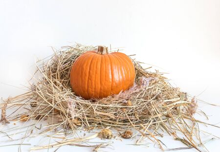 Small orange pumpkin in dry grass isolated on white background. Beautiful still life with squash in the hay 스톡 콘텐츠