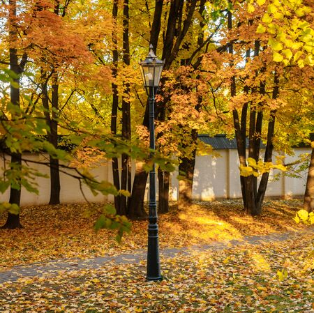 Orange yellow maple foliage in the autumn park . Beautiful autumn background. Lonely personal lantern in the autumn square