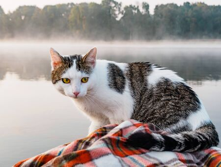 Domestic cat enjoys freedom outside the house on fishing with owners in the early morning in nature. The cat fishing on the inflatable boat on the river. A playful cat in an inflatable kayak rests together with its owners in the summer on the river. Leisure with pets outdoors