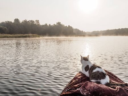 Domestic cat enjoys freedom outside the house on fishing with owners in the early morning in nature. The cat fishing on the inflatable boat on the river. A brave cat in an inflatable kayak rests together with its owners in the summer on the river. Leisure with pets outdoors Stok Fotoğraf