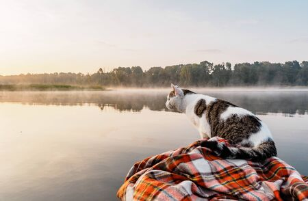 Domestic cat enjoys freedom outside the house on fishing with owners in the early morning in nature. The cat fishing on the inflatable boat on the river. A brave and curious cat in an inflatable kayak rests together with its owners in the summer on the river. Leisure with pets outdoors