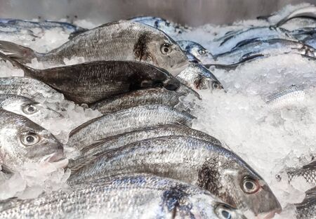 Sea bream Sparus aurata on ice at the seafood booth. Dorada fish or gilt-head bream on ice background sale in supermarket. Stok Fotoğraf