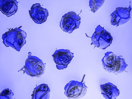 A layout of dried rose flower heads of a blue shade. Stockfoto