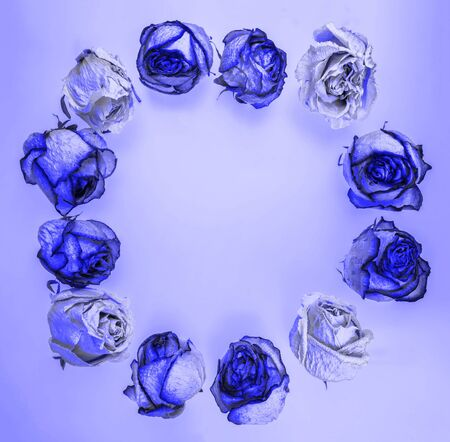 A layout of dried rose flower heads laid out in a circle of a blue shade.