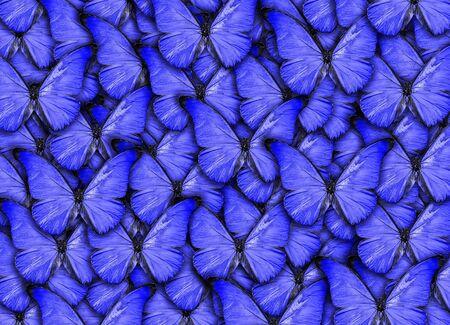 Hermoso fondo natural con muchas mariposas azules vibrantes. Obras de arte de collage de fotos. Una alta resolución Foto de archivo