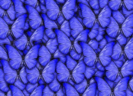 Piękne naturalne tło z dużą ilością żywych niebieskich motyli. Dzieło sztuki kolażu zdjęć. Wysoka rozdzielczość Zdjęcie Seryjne