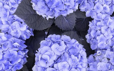 Beautiful background of blue colors of high range close-up