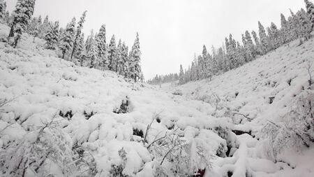 Winterwald verschneite Taiga-Hügel Schöne schöne Natur Russlands. Taiga-Wald im Winter. Frostiges schneebedecktes Wetter