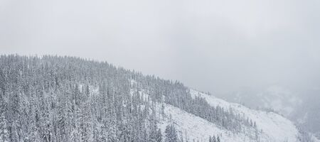 Winter forest snowy taiga hills Beautiful beautiful nature of Russia. Taiga forest in winter. Frosty snowy overcast weather Stockfoto