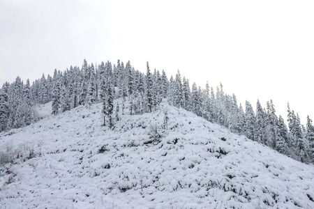 Beautiful taiga hills on Far East of Russia in early october. Taiga in winter. Beautiful nature. Frosty weather Stockfoto