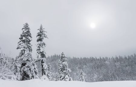Winter forest snowy taiga hills Beautiful nature of Russia. Taiga forest in winter. Frosty snowy overcast weather