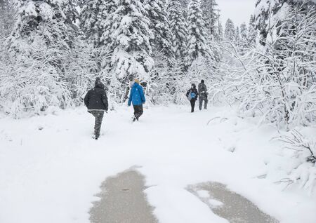 Group of some young people hiking in winter forest snowy taiga hills beautiful nature of Russia. Taiga forest in winter. Frosty snowy overcast weather backpackers walking on snowy forest