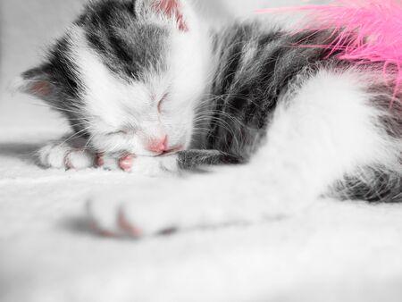 A cute little kitten sleeps on a white carpet on sun. Cute sleeping kitty