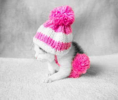 A cute little kitten in a pink knitted hat with pompoms sleeps on a white carpet. Cute sleeping kitty in hat Zdjęcie Seryjne