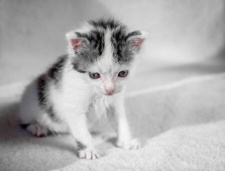 A cute little kitten looks on something frown. Sweet kitty on a white carpet evil look. Reklamní fotografie