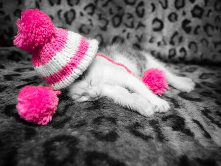 A cute little kitten in a pink knitted hat with pompoms sleeps in a new house on a spotted leopard color plaid. Cute sleeping kitty in hat