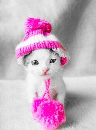 A cute little kitten in a pink knitted hat with pompoms looks on something. Cute little kitty in hat on a white carpet.