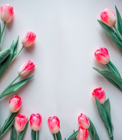 Pink flowers white background. Flower Frame rose tulip. Flat lay mock up, top view.