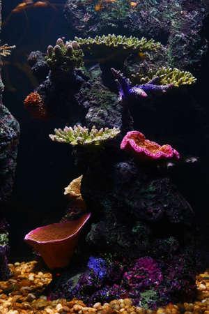 Colorful reef in an aquarium