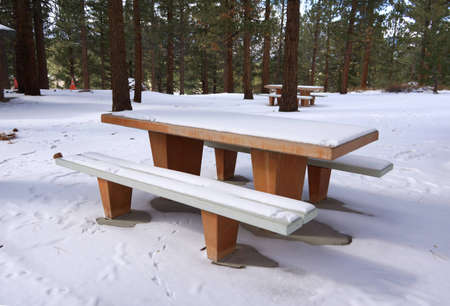 Snow covering bench in forest