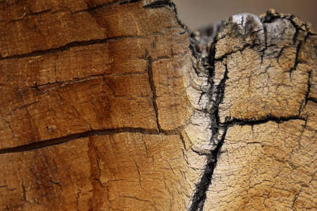 Close-up texture and pattern of natural wood