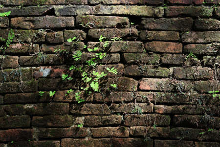 New plants growing out from old brick wall