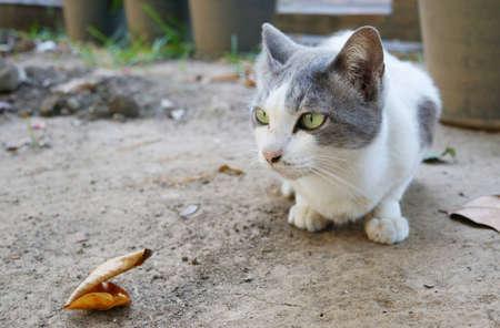 Cute white gray cat in a garden Stock Photo