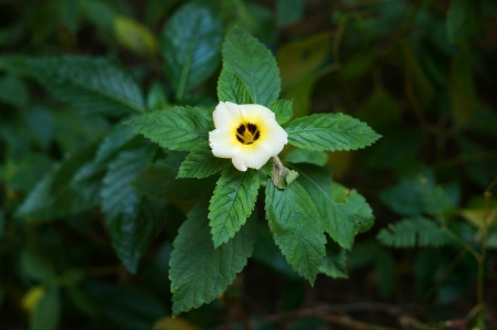 Single white yellow flower with green leaves