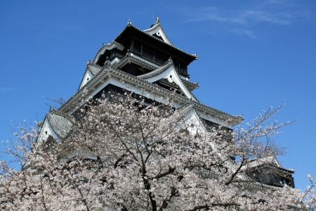 Old castle in Japan with pink cherry blossom (sakura)