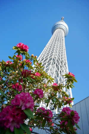 Tokyo sky tree, Japanese radio tower with pink flowers Editorial