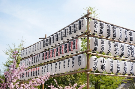 Rows of Japanese lanterns with blue sky and fake Sakura (Cherry blossom)