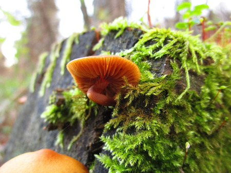 fungal: fungal spike Stock Photo