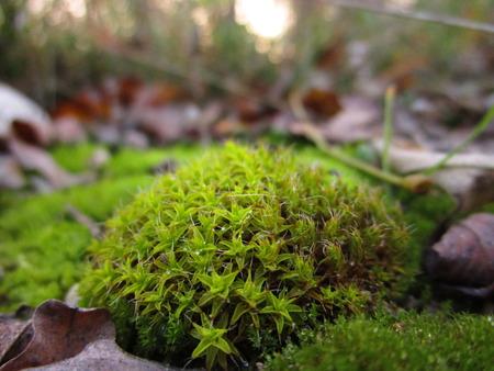 mossy: macro mossy Stock Photo