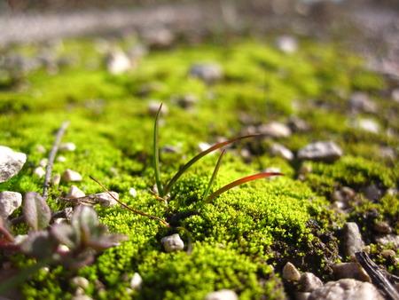 mossy: mossy stone Stock Photo