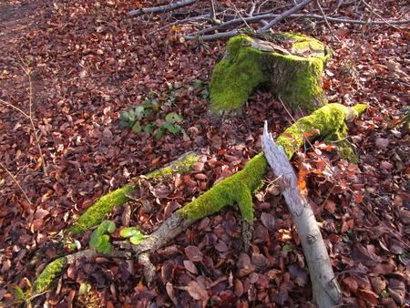 mossy: mossy stub
